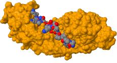 Komplex aus Importin-α und einer NLS-Sequenz eines Nukleoplasmins aus dem Frosch Xenopus