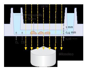 Querschnitt µ-Slide | Ibidi | Biontex