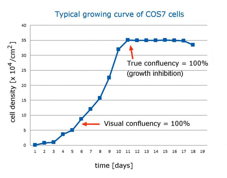 Reale Wachstumskurve von COS-7 Zellen | Biontex
