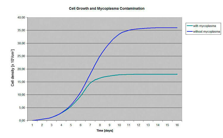 Different cell growth of HeLa cells with and without mycoplasma contamination | Biontex