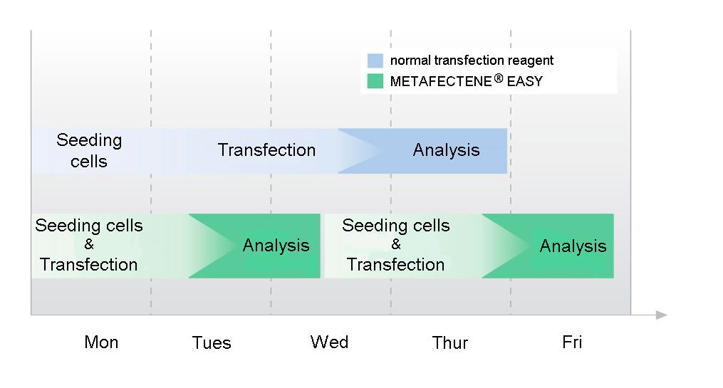 Timescale for the fast-forward protocol of METAFECTENE EASY