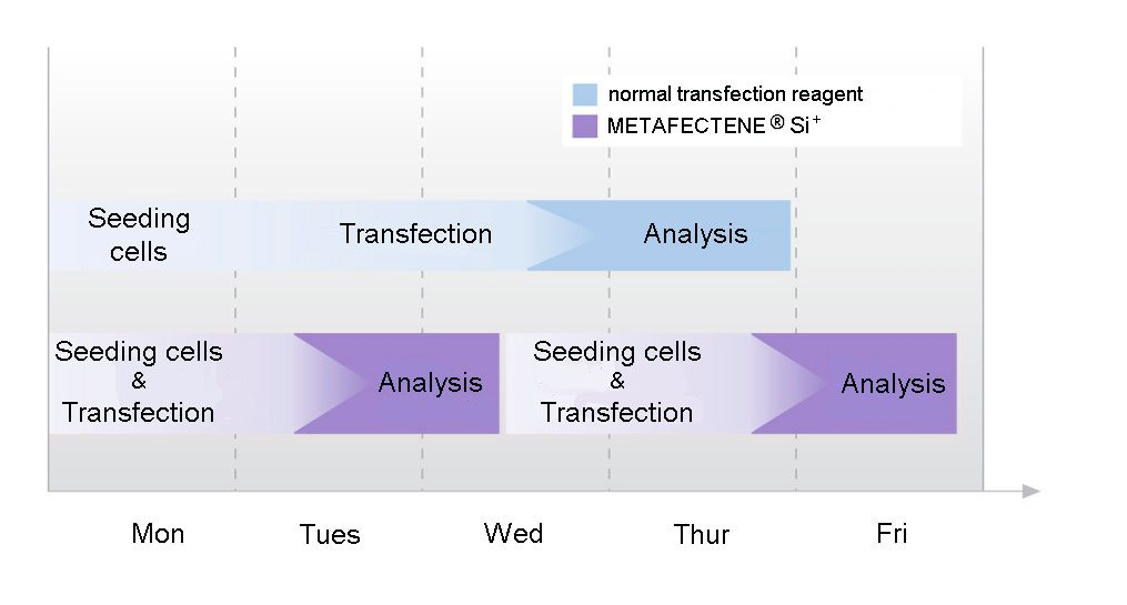 Timescale for the fast-forward protocol of METAFECTENE SI