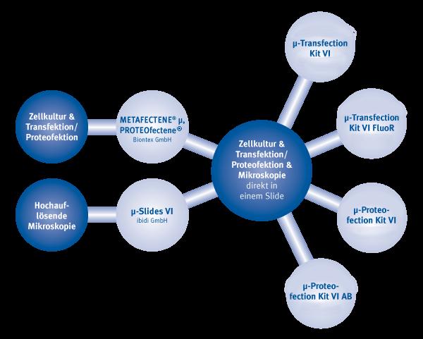 Zellkultur, Transfektion oder Proteofektion und hochauflösende Mikroskopie direkt im Kulturgefäß | ibidi | Biontex