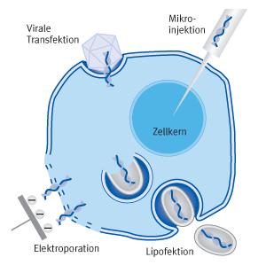 Verschiedene Methoden der Transfektion | Biontex
