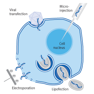 Different transfection methods | Biontex