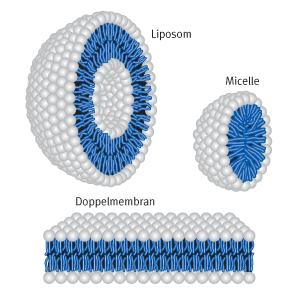 Liposom, Micelle und Doppelmembran kationischer Lipide | Biontex