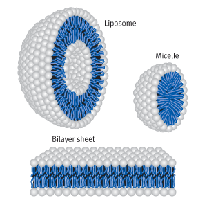 Liposome, Micelle and Bilayer sheet of cationic Lipids | Biontex