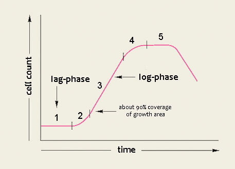 Ideal growth curve of cells